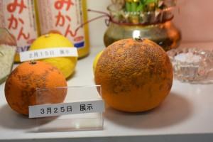 SEV光技術_柑橘展示