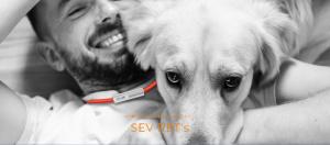 SEV_Pet`s Main HP